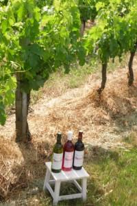 vigne blanc,rosé, rouge